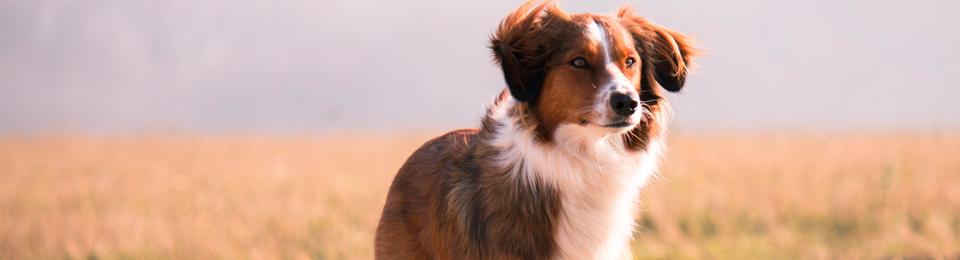 Dog Prairie